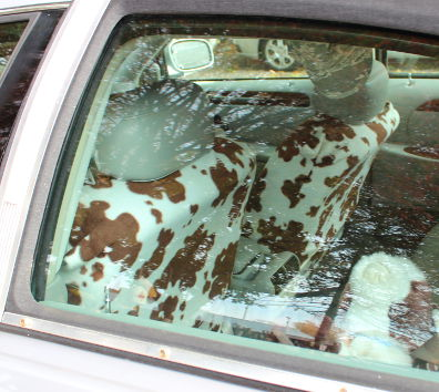 Cow car interior